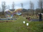 DSC00663 Popping Bubble at Wet Rock Gardens Farm 2-05